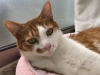 猫が行方不明~失踪と帰宅の盤を起てたら、やはり規則性が見つかりました~